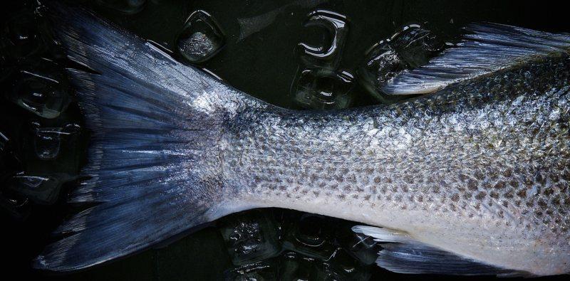 potraviny libido morské plody ryby losos